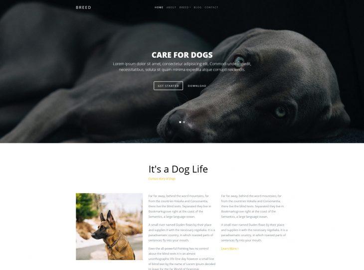 Website thú cưng 08